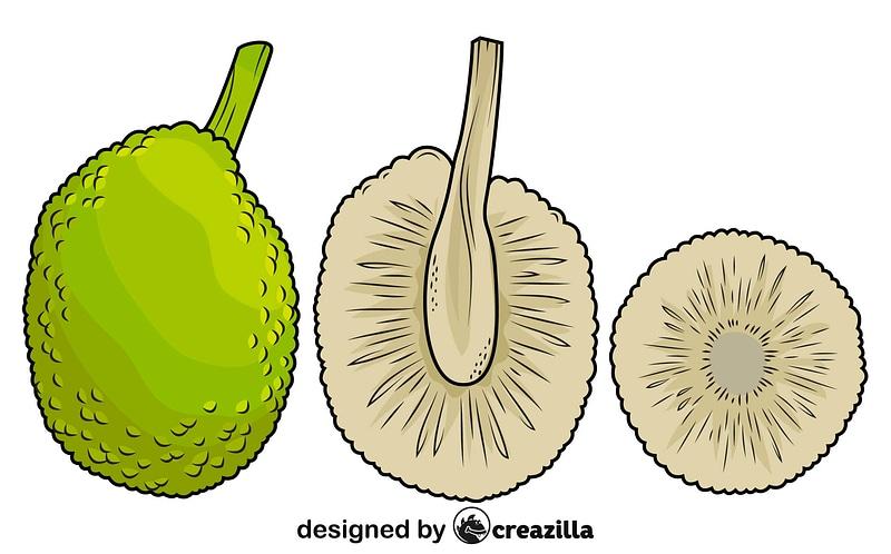 Sliced Breadfruit vector
