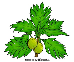 Two Breadfruits on the Tree vector