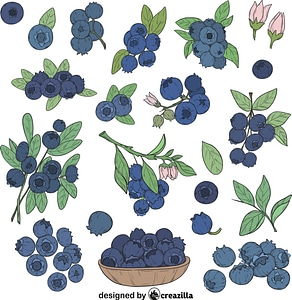 Set of Blueberry vector
