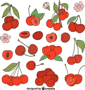 Set of Cherry vector