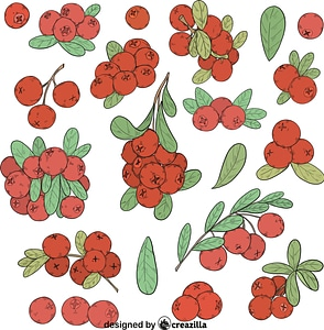 Set of Cranberry vector