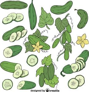 Set of Cucumber vector