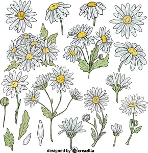 Set of Daisy vector