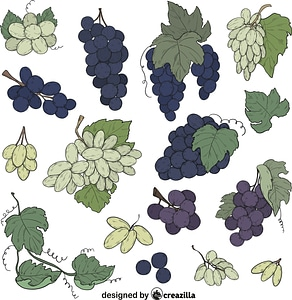 Set of Grape vector