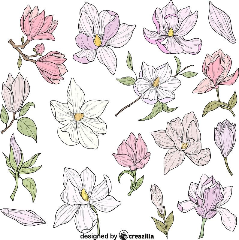 Set of Magnolia vector