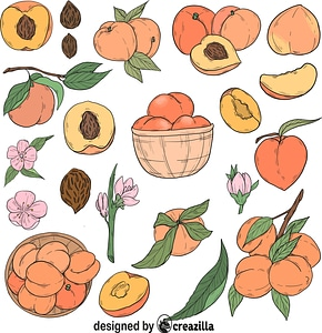 Set of Peach vector