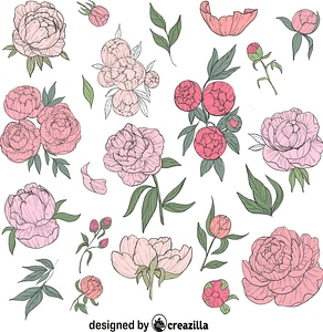 Set of Peonies vector