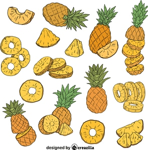 Set of Pineapple vector