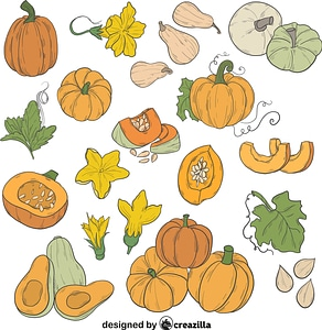 Set of Pumpkin vector