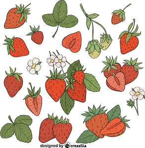 Set of Strawberry vector