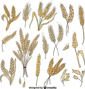 Set of Wheat vector