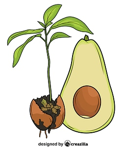 Avocado Cut in Half and Its Sprout vector
