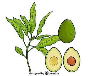 Avocado Cut in Half vector