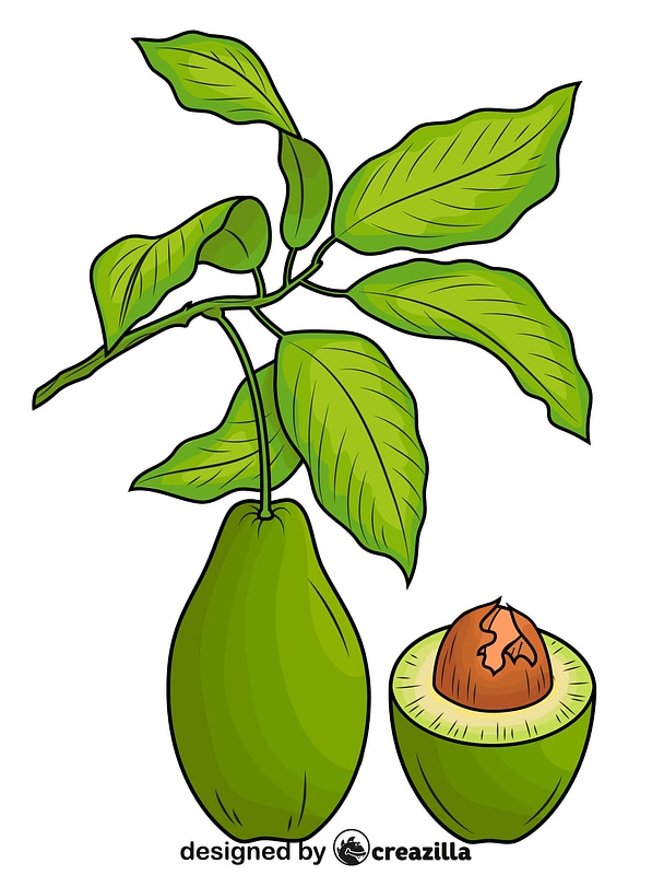 Avocado with Leaves and a Half vector