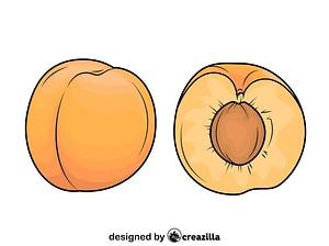 新鲜整个和切杏矢量图像