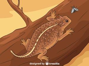 Texas Horned Lizard vector