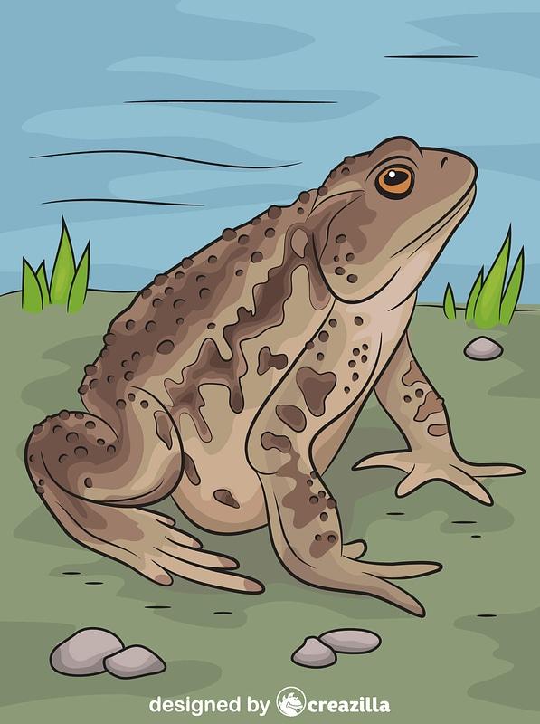 Asiatic Toad vector