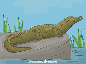 Nile Crocodile vector