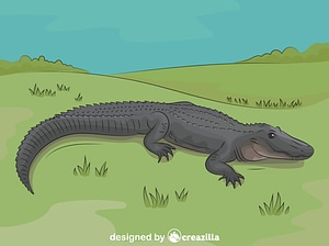 American Alligator vector