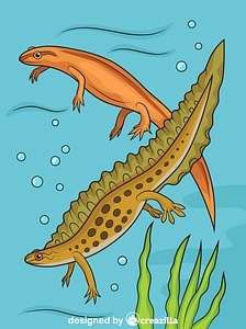Smooth Newts vector