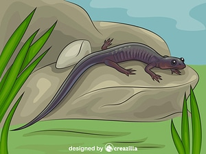 Northern Gray Cheeked Salamander vector