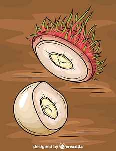 Rambutan Cut in Half vector