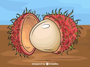 Ripe Rambutan vector