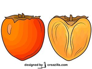 柿子切成两半矢量图像