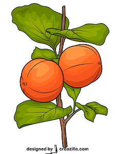 Two Persimmons on Branch vector