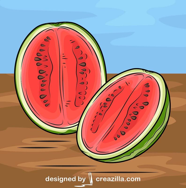 Watermelon Cut in Half vector