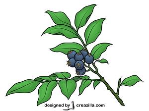 Huckleberry vector