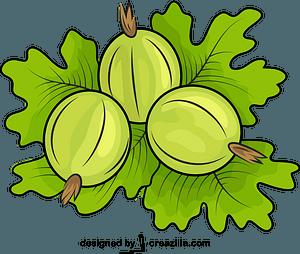Gooseberries vector