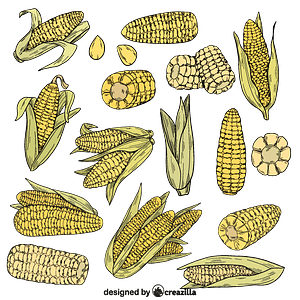 Set of corn vector