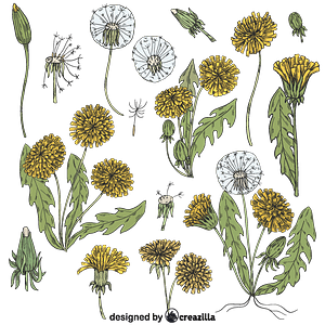 Set of dandelion vector