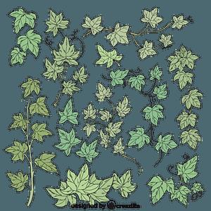 Set of ivy vector