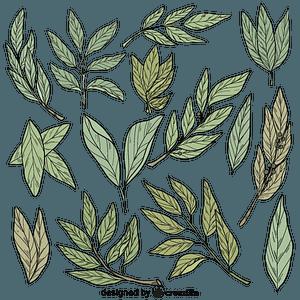 Set of laurel vector