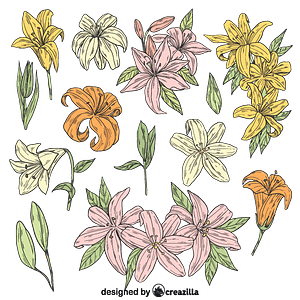 Set of lilies vector