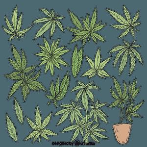 Set of marijuanna vector