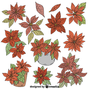 Set of poinsettia vector