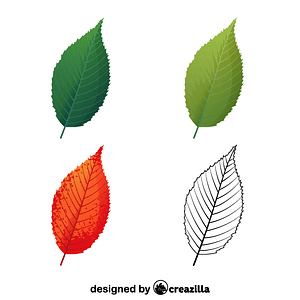 Blue beech leaves vector