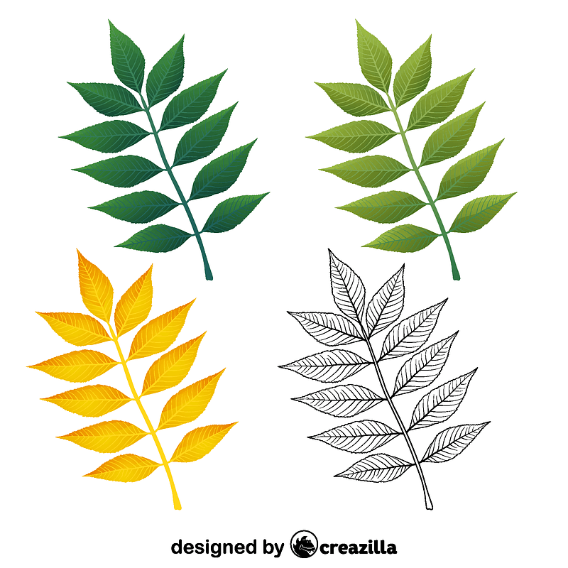 European ash leaves vector