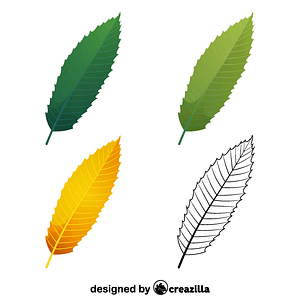 European chestnut leaves vector