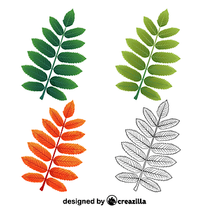 European mountain ash leaf ベクターイメージ狐