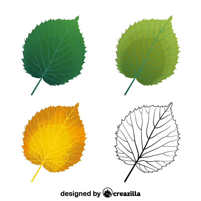 Handkerchief tree leaves ベクターイメージ狐
