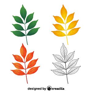 Modesto ash leaves ベクターイメージ狐