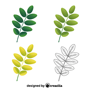 Pagoda tree leaves vector
