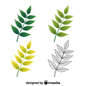 Common ash leaves ベクターイメージ狐