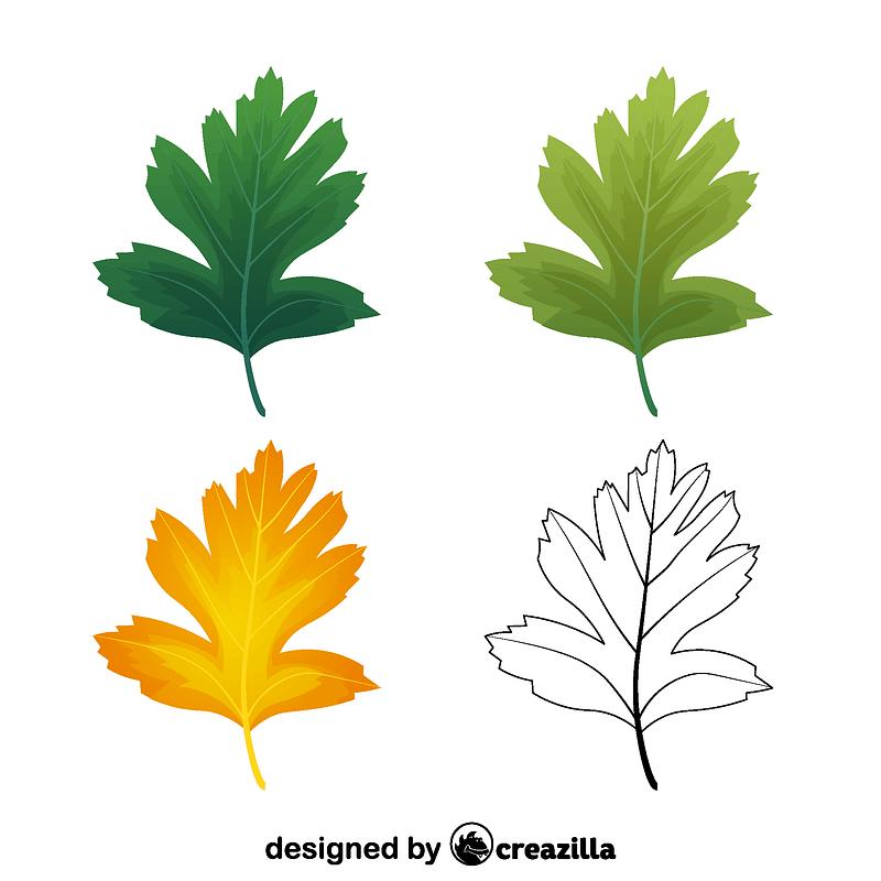 Common hawthorn leaves vector