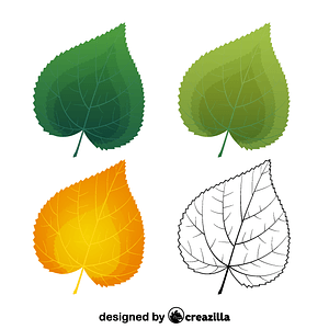 Common lime leaves vector