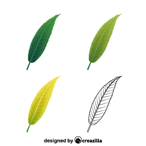 Crack willow leaves vector